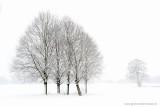 2N9B3152  winter bomen Dalfsen