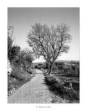 04/04/2017 · Rossell, arbres al costat del camí