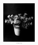 03/06/2017 · Flors de plàstic