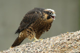 Birds Around Manitoba