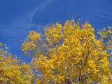 Autumn Leaves and Blue Skies