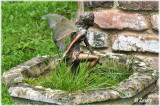 Wookey Hole garden