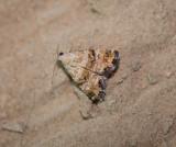 Noctuidae (family of moths): 16 species