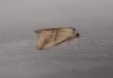 Erebidae (family of moths): 13 species