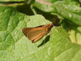 My Butterfly Photo Life List