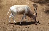 Zoo-Botanical Garden Nahariya