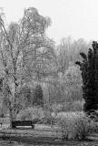 Ice Storm 02 BW