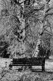 Ice Storm 05 BW