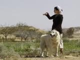 BM4J1801 - Neot Smadar shepherd