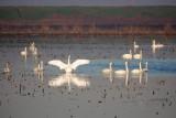 Viewpoint Birding Class 01 20 13