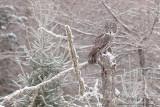 GGO on snowy scene