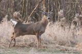 Deer on full alert