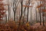 Beukenreservaat - Beech reserve