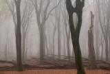 Door het oog van de boom