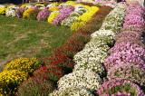 06_Flower arrangement.jpg