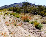 Dirt road to Horse Thief Springs