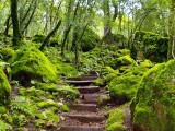 Sugarloaf steps