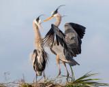 Birding 2013