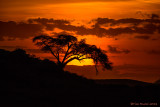 1DX_4471 - Sunset in Africa