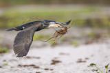 1DX_9136 - Cormorant