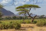 M4_11349 - Kenya Scenery