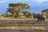 M4_10926 - Elephant