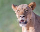 1DX_7639 - Lioness