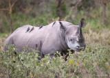 1DX_8210 - Black Rhino
