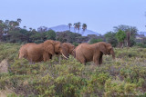 M4_11181 - Elephants