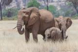 1DX_7425 - Elephants