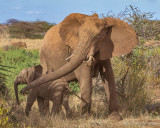 M4_11110 - Baby Elephant with Mother