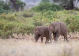 1DX_6682 - Baby Elephants