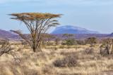 M4_11224 - Samburu National Reserve