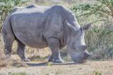 1DX_8675 -  Rhino