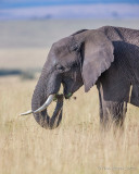 1DX_10148 - Elephant