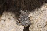 Butterflies - 2012