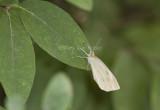 Cabbage White _MG_8155.jpg