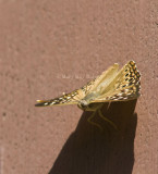 Hackberry Emperor _MG_4310.jpg