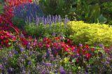 Border Flowers
