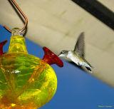 Hummingbird 101