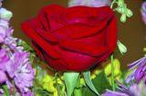 Rose Blossom Boquet