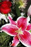 Stargazer and Roses