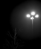 Lamp, mist & tree in winter - 2013 January Challenge B&W #14