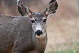 7540 Deer head shot.