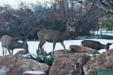 7596 Deer