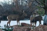 7600 Deer