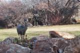 7624 Deer