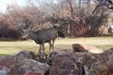 7628 Deer