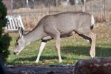 7630 Deer