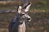 7633 Deer